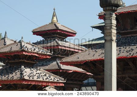 Hindu Temple Towers And Rooftops Covered With Numerous Pigeons