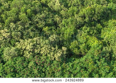Aerial Forest View On Top Of Trees