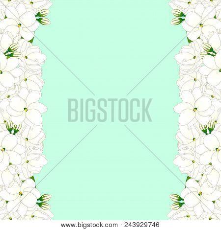 Jasminum Sambac - Arabian Jasmine Border On Green Mint Background. Vector Illustration.