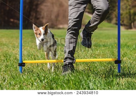 Agility Dog Sport Training With A Puppy Dog, Man And Whelp Jumping Over Hurdles