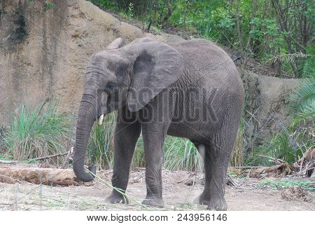 Gorgeous Baby Elephant Roaming In The Wilds.