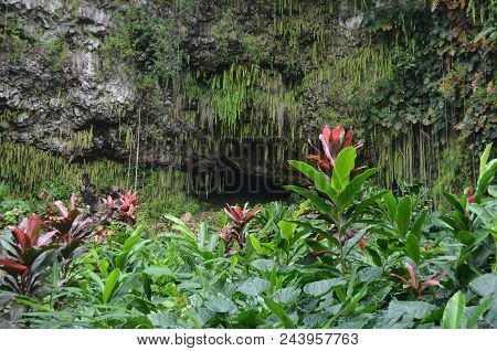 Fern Grotto, A Beautiful Location On Kauai For Many Types Of Celebrations.