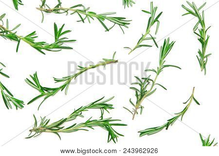 Rosemary Sprigs On White Background. Natural Green Pattern Of Fresh Herbs. Top View, Flat Lay