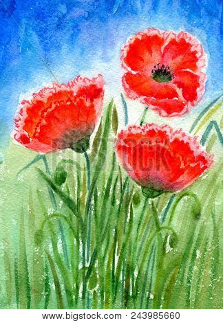 Three Red Poppies With Leaves On A Background Of Meadow And Sky. Hand-painted Watercolor Illustratio