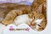 Tabby cats snuggling in a bed with anniversary greeting. poster
