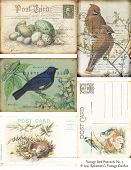 Vintage bird and postcard digital collage sheet. poster