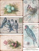 Digital collage sheet of vintage birds and tattered french postcards poster
