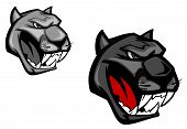 Angry panther or puma for mascot design isolated on white background. poster