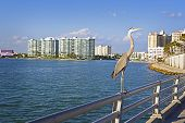 A giant heron perches on a metal railing on a new pier in a Gulf Coast urban area. poster