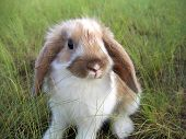 rabbit decorative on the green grass happy baby animal poster