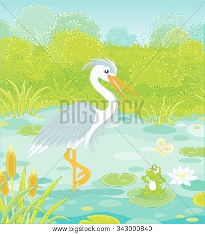 Big Grey And White Heron And A Small Green Frog On A Lake Among Cane, Grass And Bushes Of A Summer M