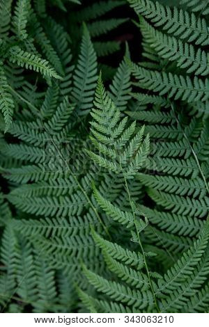 Background With Fern Leaves In Nature. Concept Of Ecological Banner For Text With Green Leaves