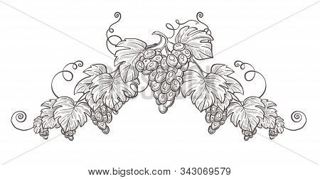 Grape Bunches On Branch Isolated Sketch, Berries Cluster