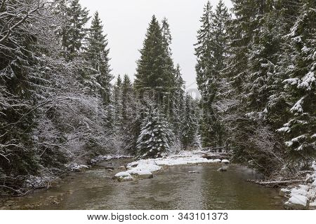 Winter Landscape, Beautiful Winter Nature: Fast Mountain River Flows Among A Snowy Coniferous Forest
