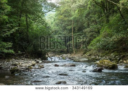 Shallow Brook Flowing Between Green Deep Primeval Forest