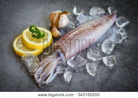 Raw Squid On Ice With Salad Spices Lemon Garlic On The Dark Plate Background / Fresh Squids Octopus
