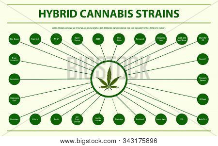 Hybrid Cannabis Strains Horizontal Infographic Illustration About Cannabis As Herbal Alternative Med