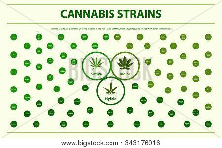 Cannabis Strains Horizontal Infographic Illustration About Cannabis As Herbal Alternative Medicine A