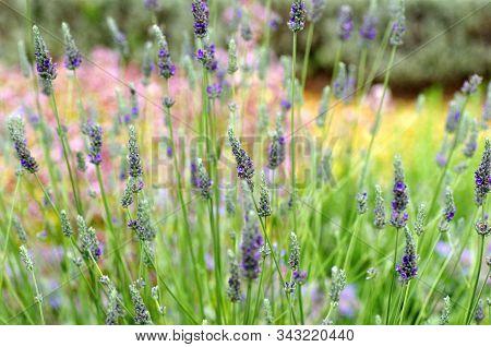 Flower Garden Background With Plants In United Kingdom