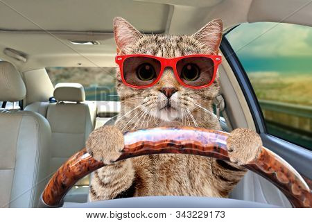 Portrait Of A Cat With Glasses Driving A Car