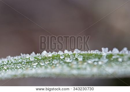 Green Grass On Meadow Is Covered With Snow.