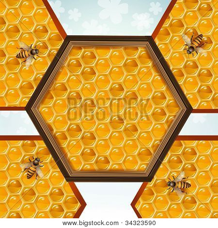 Bees and honeycombs