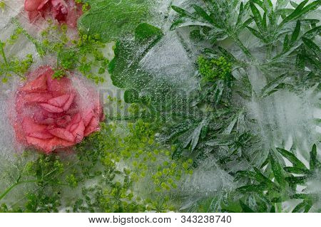 Background Of Orange   Balsamine Flower  And Green Leaves Of   Wormwood (absinth) Frozen In Ice