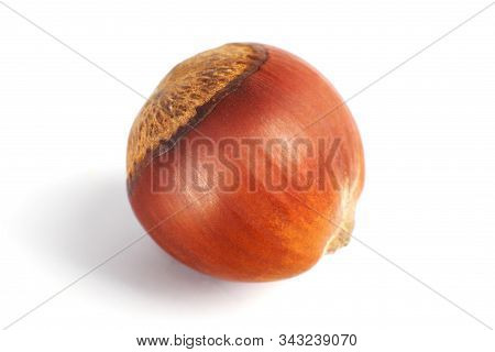 One Dried Hazelnut In Closeup Isolated On Rhe White Background