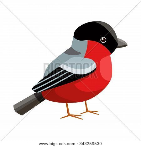 Isolated Object Of Bullfinch And Bird Logo. Set Of Bullfinch And Robin Vector Icon For Stock.