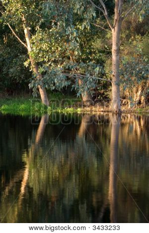 Australian Bushland On River