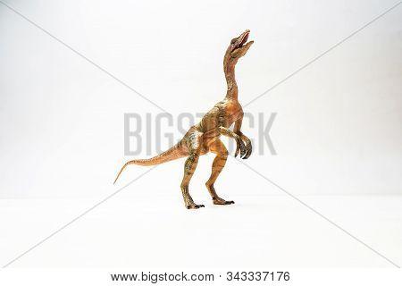 Compsognathus  Dinosaur On White Background