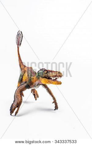 Feathered Velociraptor  , Dinosaur On White Background  Isolate Background