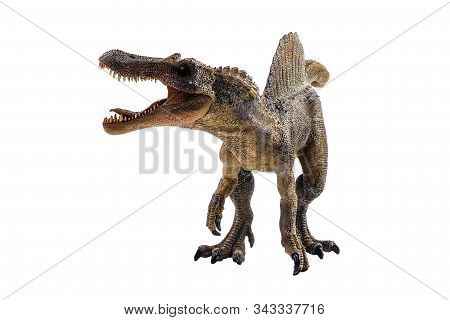 Spinosaurus  ,dinosaur On White Background