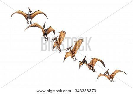 Pteranodon (pterodactyl) Dinosaur On White Background