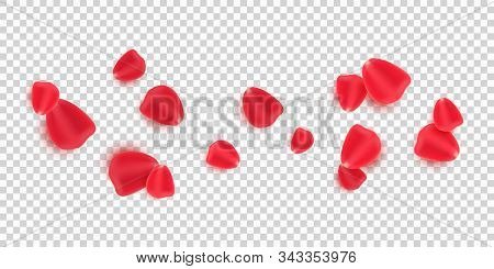 Scattered Red Rose Petals Isolated On Transparent Background. Valentine's Day. Romantic Flowers For