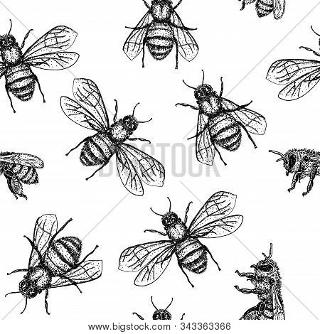 Vector Seamless Pattern With Honey Bee. Engraving Style. Hand Drawn Isolated Insect Sketch.