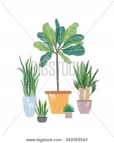 Decorative Houseplants Flat Vector Illustration. Natural Yucca And Sansevieria In Flowerpots. Potted