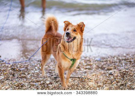 Dog Running And Enjoying On The Beach