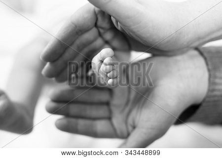 Father Or Mother Holding Foot Of Newborn Baby. Adult Hand And Baby Tiny Baby Feet. Happy Parenthood,