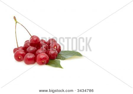 Cherries Isolated On A Whiteground.