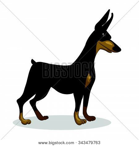 Dog Doberman Isolated At The With Background