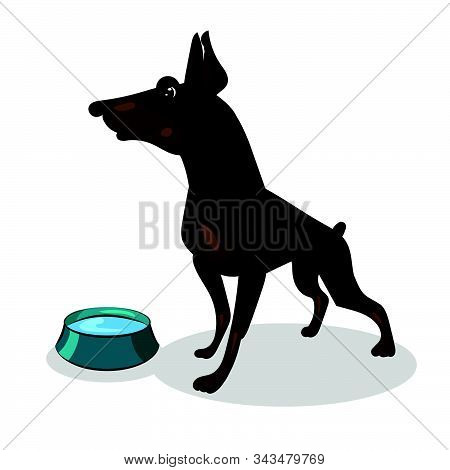 Dog Doberman Isolated And Blue Plate With Water
