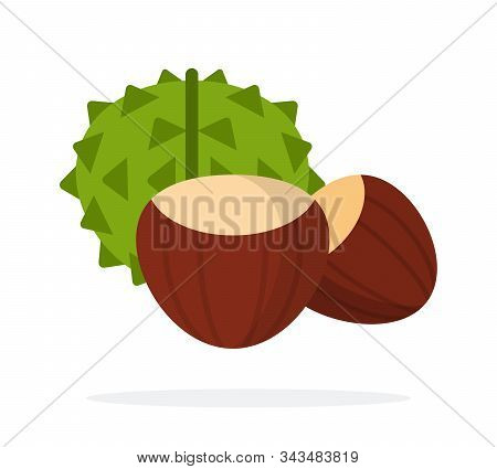 Chestnut Fruit In Green Peel And Peeled Chestnut Fruit Flat Isolated