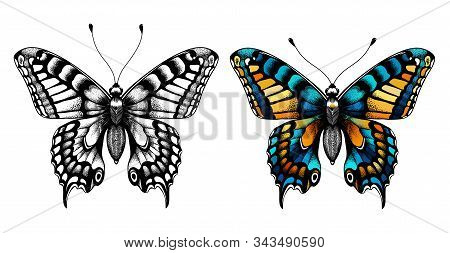 Kids Coloring Page. Black And White Butterfly Sketch And Colorful Butterfly. Coloring Picture With B