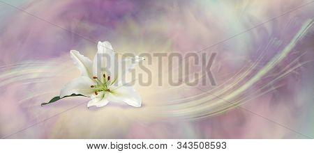 Beautiful White Lily Flowing Background - The White Lily Symbolises Virginity, Chastity And Virtue,