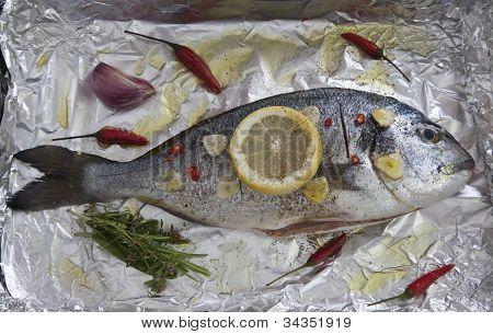 Gilt-head Sea Bream