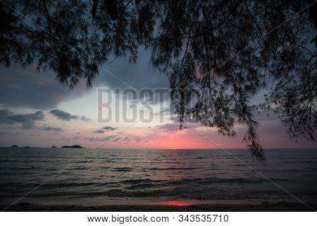Tropical trees silhouetted against a dusk blue sky on sea beach.