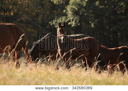 Horses at dawn sunrise sunset Nature background Nature landscape Nature background farm horse trees Natural Nature background Nature Horses meadow field pastrure Nature background mammal dusk Nature background stallion mare colt foal sun Nature background