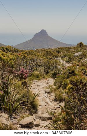 Trail To Lion's Head Mountain Table Mountain National Park.