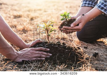 Environment Earth Day, Hands Of Two Man Helping Were Planting The Seedlings And Growing Of Young Spr